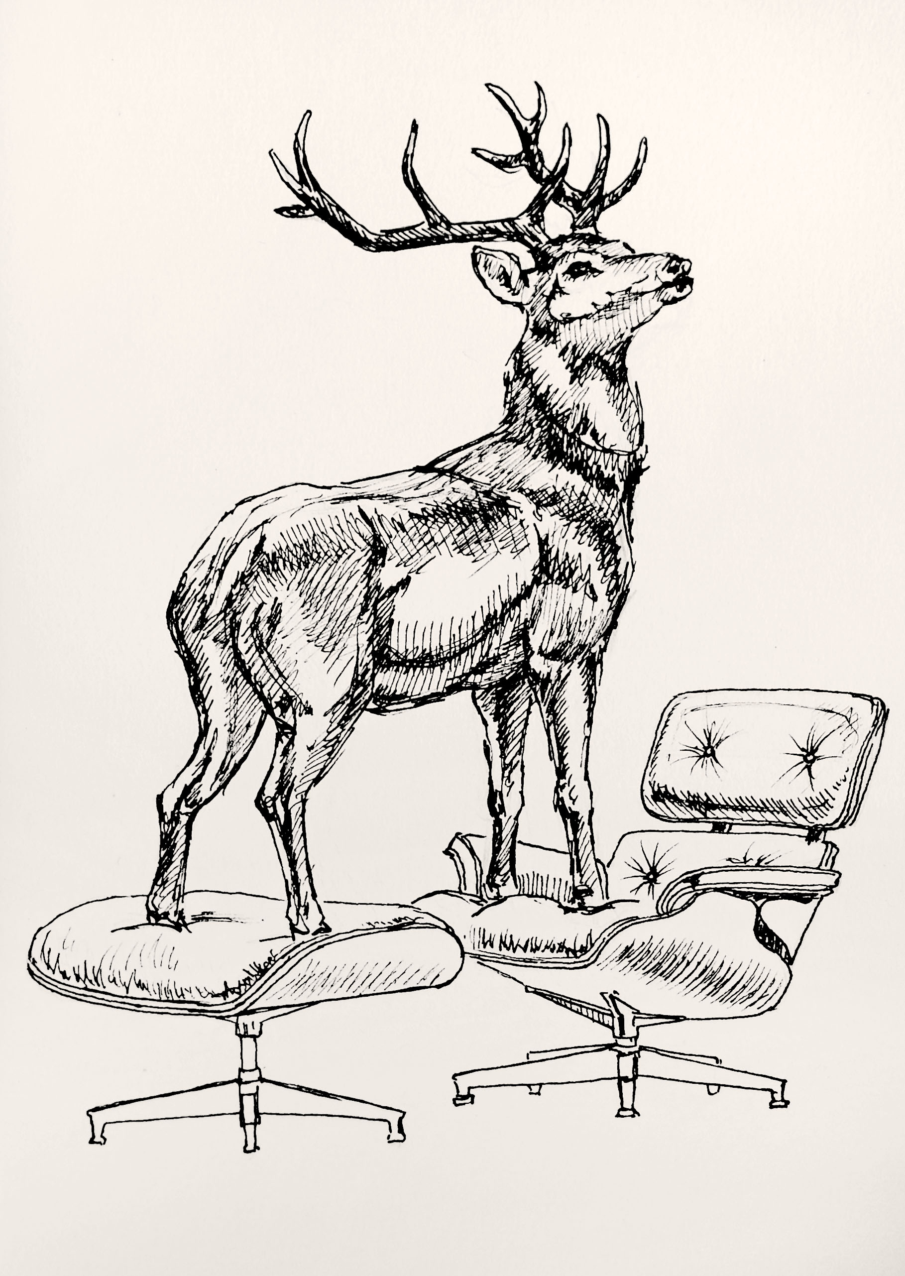 HL JR Eames deer